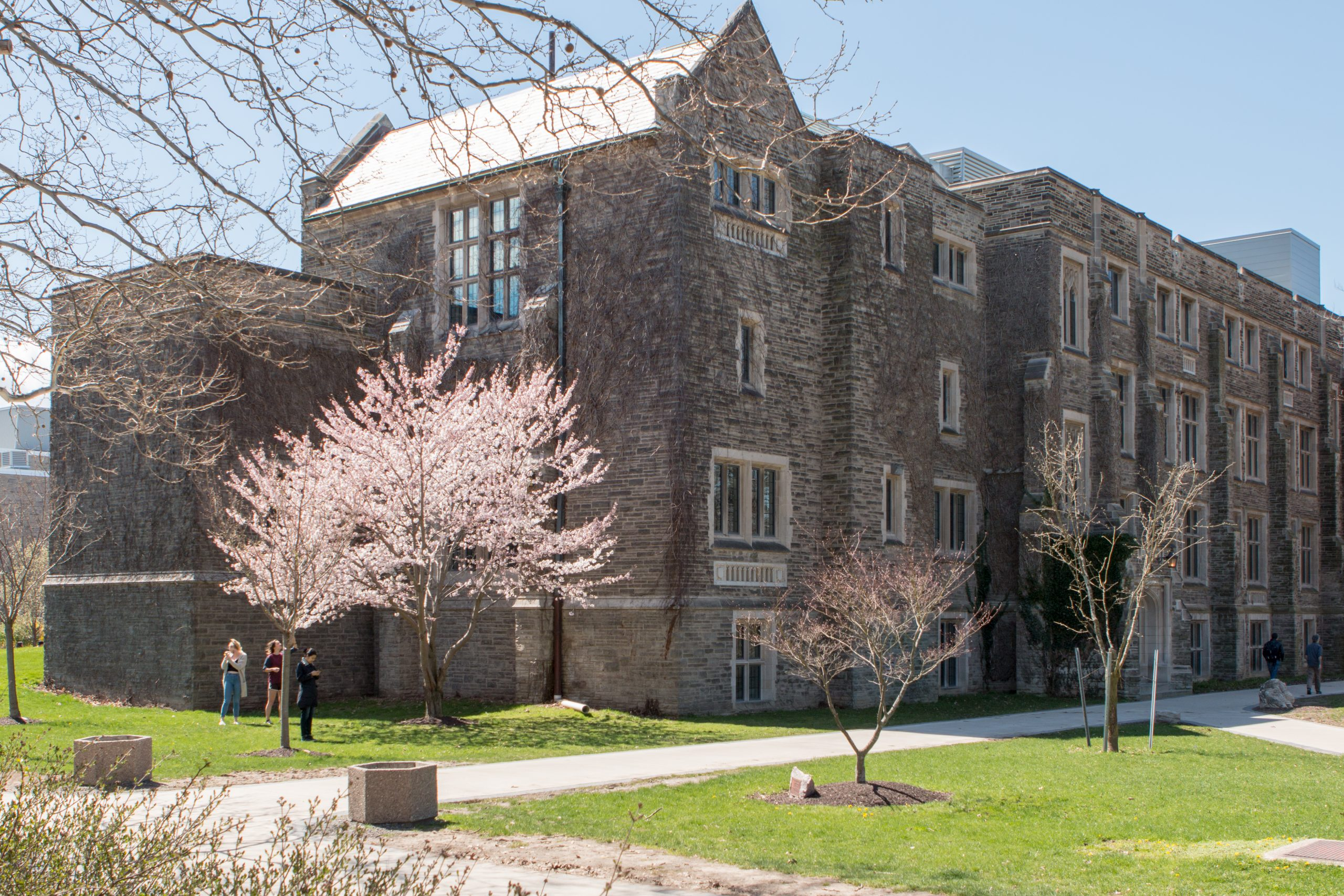 Hamilton Hall building in the spring, with cherry blossom tree blooming.